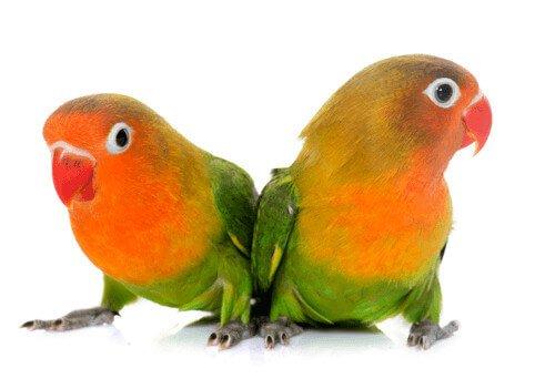 Alles voor je Vogel